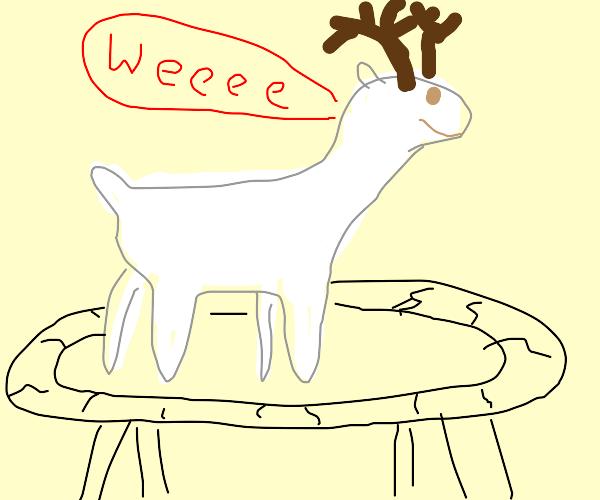 White deer on a trampoline
