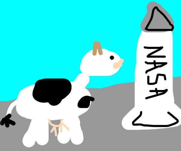 rocket scientist cow