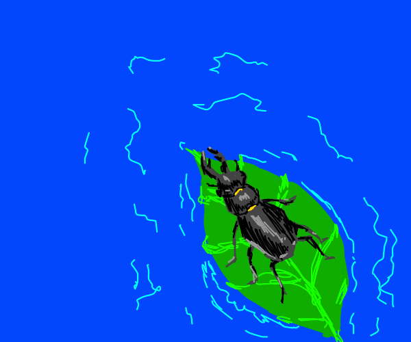 Stag beetle just chillin in a river