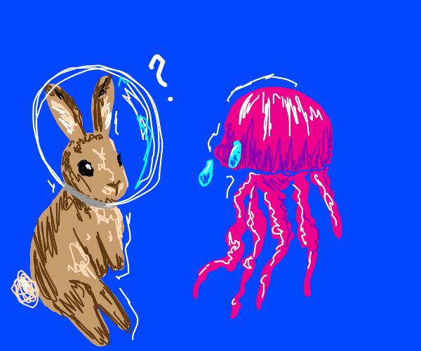 Rabbits see a sad jellyfish