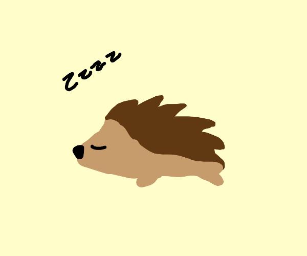 lazy hedgehog