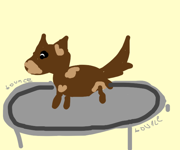 a brown dog on a trampoline