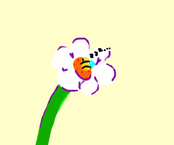 Lazy Bee