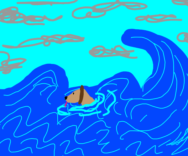 dog in the sea