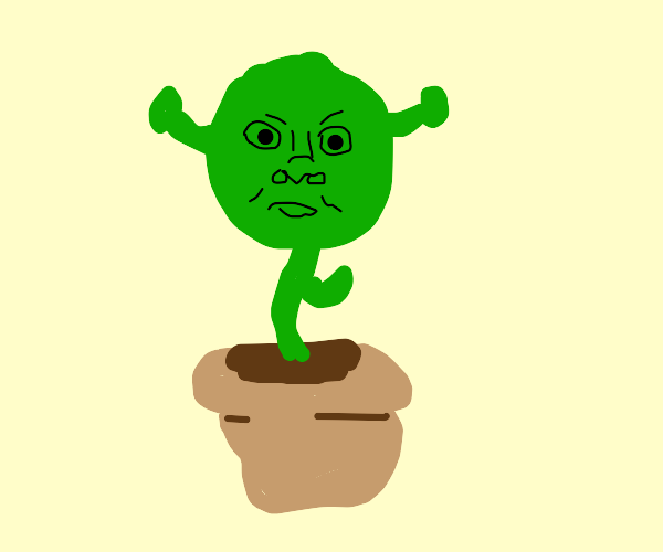 Shrek plant