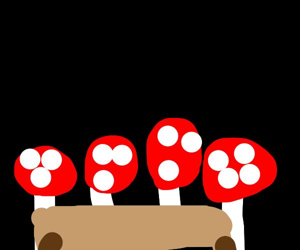 mushroom meet and greet