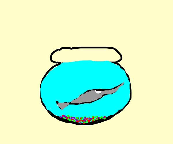 Pet Swordfish