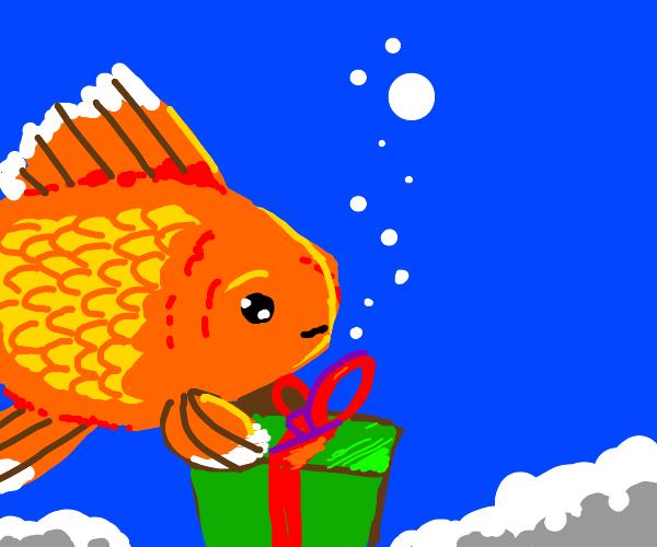 Goldfish opens present