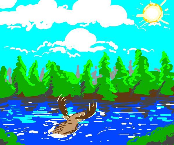 deep moose stares at the sun