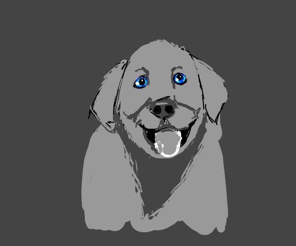 happy blue-eyed dog