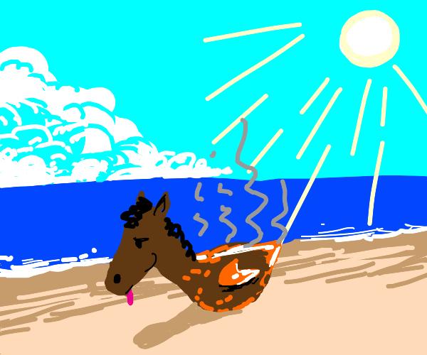 sun burnt horse at the beach