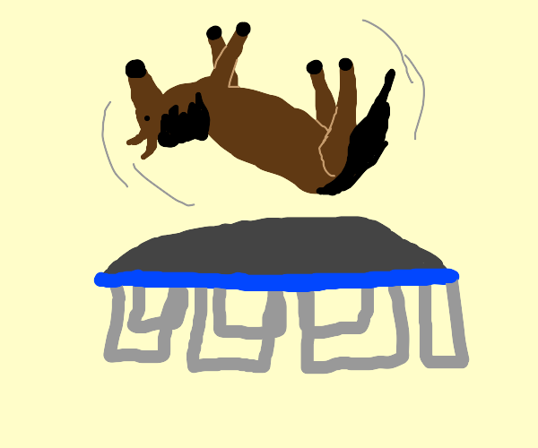 Horse on a trampoline
