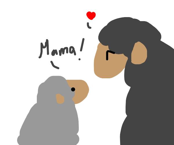 Grey sheep sees mama