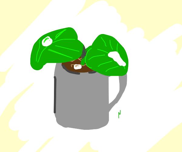 plants in a mug soaking up milk