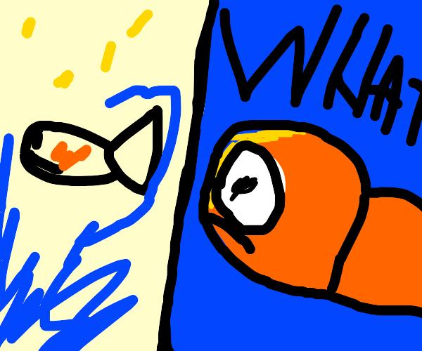 Comere fish f I s h Y