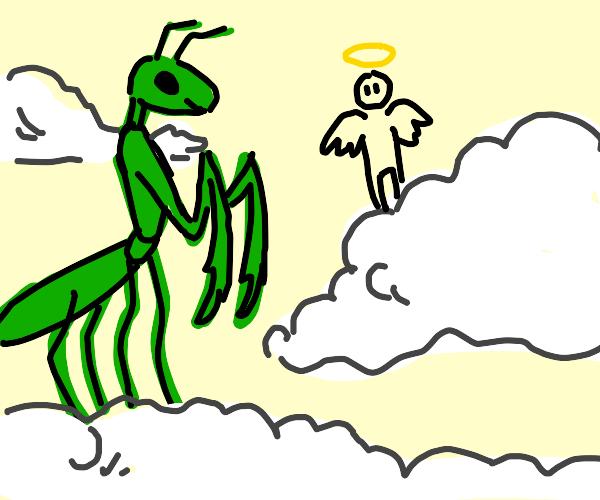 Praying Mantis enjoying the afterlife
