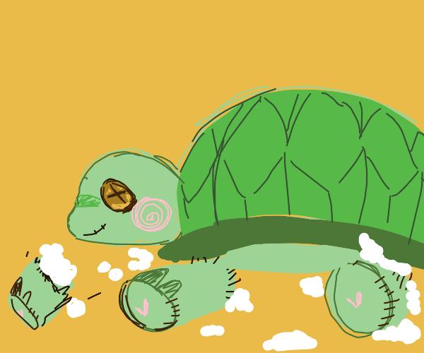 Plushy turtle lose its limbs