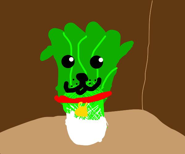 Pet Celery