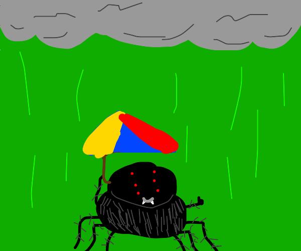 spider dont let acid rain ruin himb day :)
