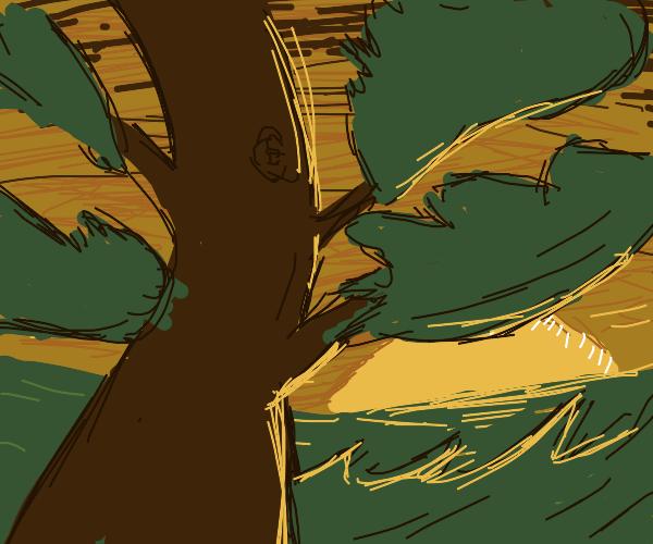 Sunset peeks from beneath a tree.