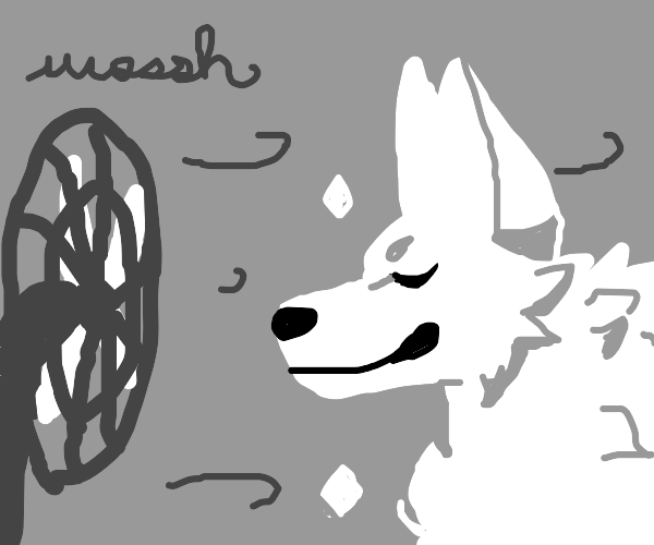 White dog infront of a fan