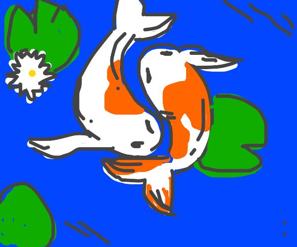 Jyng & Jyang koy fish
