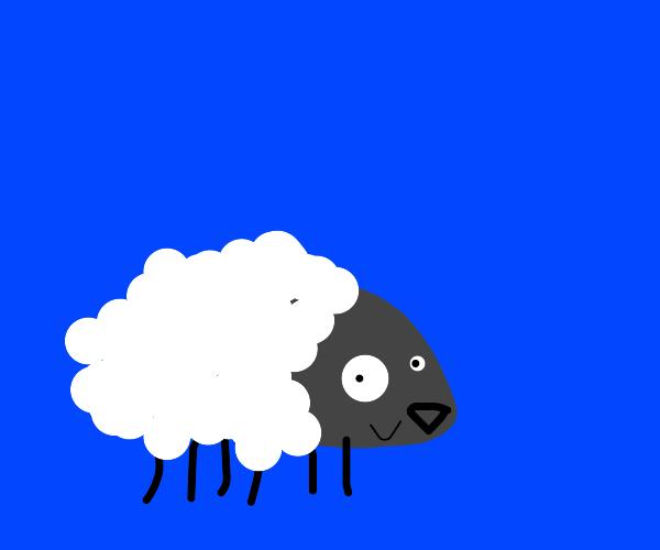 if a hedgehog had wool
