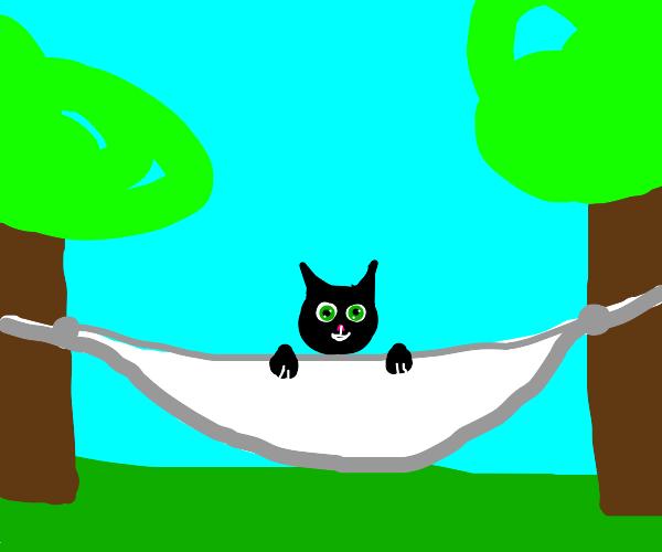 Black cat enjoys a hammock