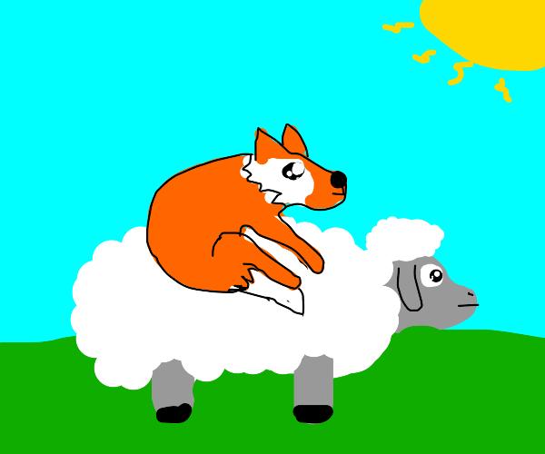 cute fox on a cute sheep :)