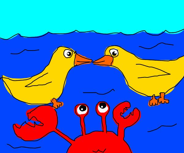 2 ducks 1 crab