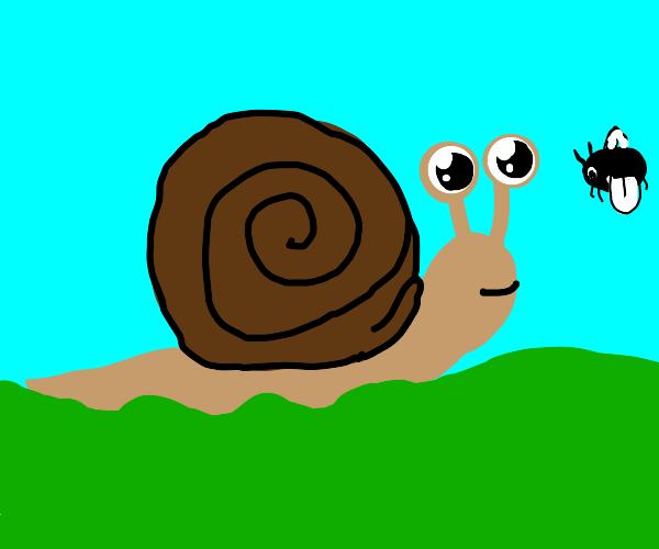 Snail observes a bug