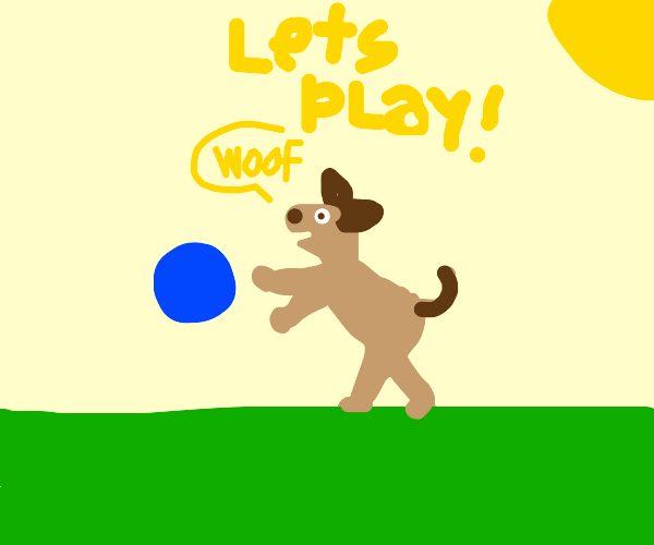dog wanting to play