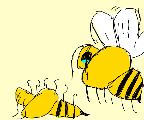 Bee mourns his partner's demise