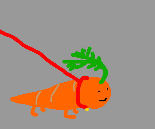walking your pet carrot