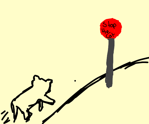 the cat must stop. the signs demand it.
