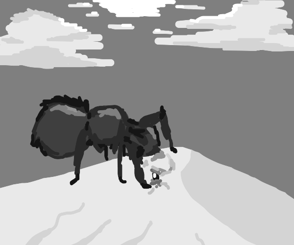 ant with head in sand
