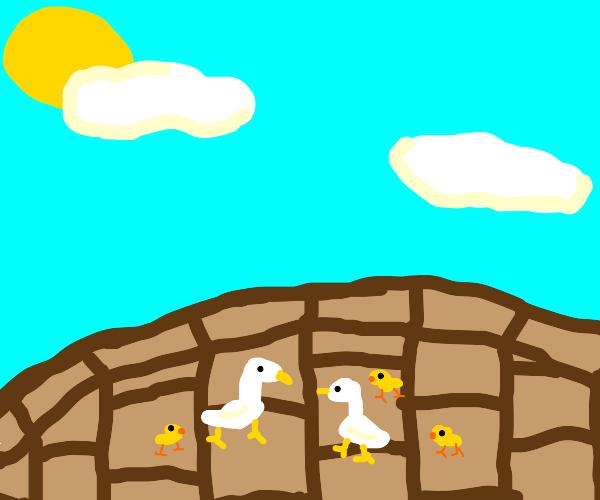 lots of duckies!