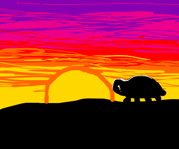Turtle cries towards the sunset