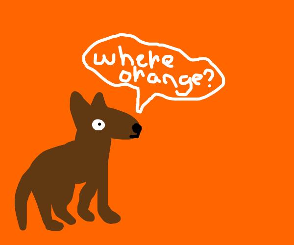 Dog looking for orange in an orange