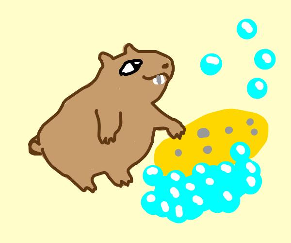 Hamster pushing a Sponge