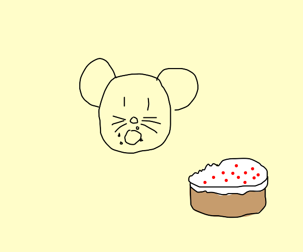 Rat eating cake