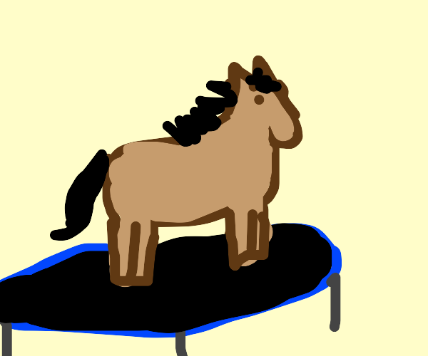 horse on the trampoline