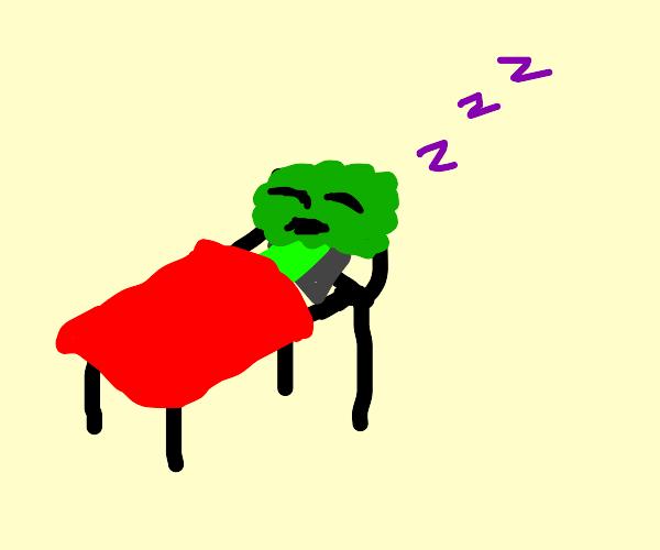 Little sleeping broccoli