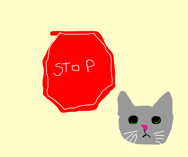 stop the cat
