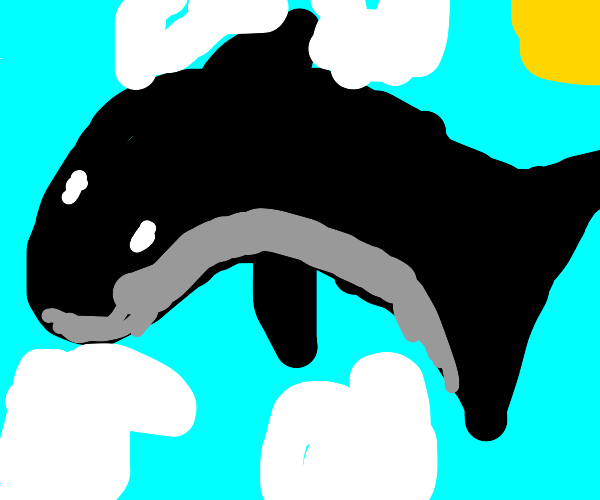 Whale Fighting