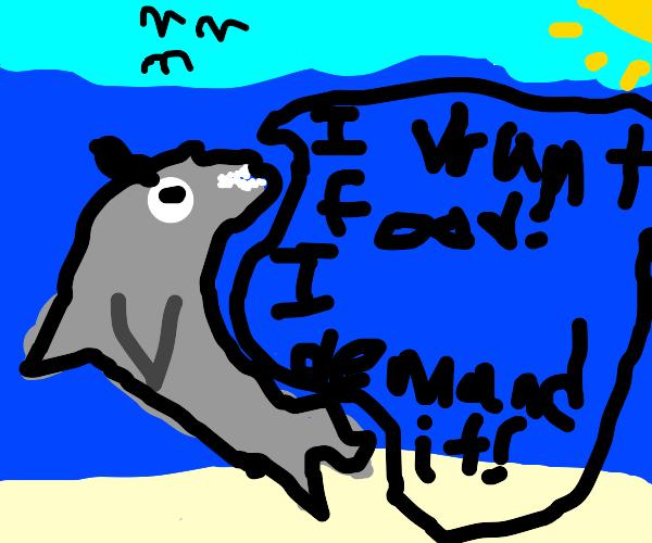 shark demands more food