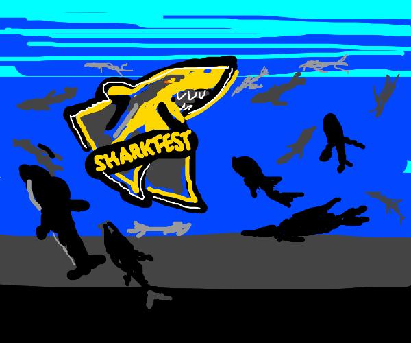 Shark Racing