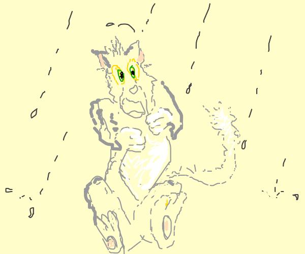 Cat having a seizure while it's raining???