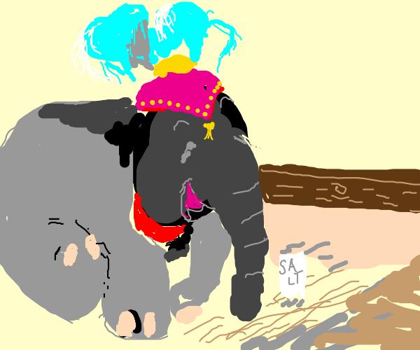 salty elephant
