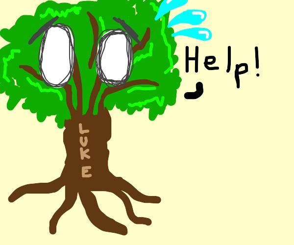a tree named luke needs help